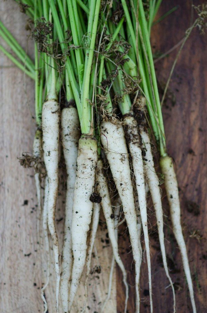 vegetables-lunar-white-carrot-55-days-2_2000x